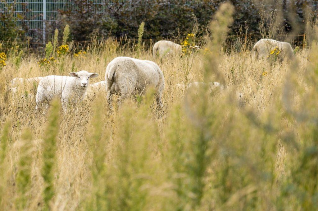 klimaneutral mit dem Naturschutzprojekt Wildwiese